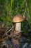 У Креста Скорби наткнулись на грибы. Собирать не стали...