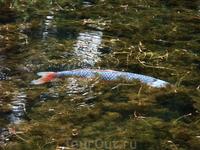 Озеро искусственно созданное,а рыбы чувствуют себя в нем превосходно!