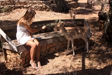 о. Закинтос. Природный парк Аскос. Для оленей в парке предоставлена полная свобода передвижения