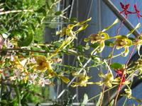 и это то же орхидеи