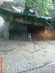 суррикаты в зоопарке Роттердама