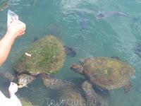 Кормим черепах
