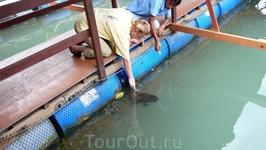 На рыбной ферме