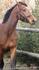 Вообще, сам я цыган и лошадей очень люблю)