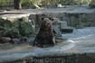 Утро в зоопарке - водные процедуры