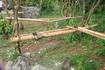 Бали/ В парке возле храма Улувату полно мартышек которые из кустов прыгают туристам на плечи, а то и вовсе на головы. Могут стащить кепки и очки.