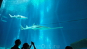 Акулы но уже с другого ракурса