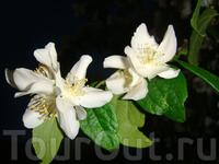 природа там красивая, никогда не фотографировала цветы, а тут прям захотелось :)