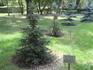 В парке. Дерево посажено Д.А. Медведевым в бытность его еще не президентом