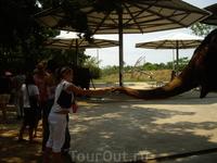 кормлю слонов