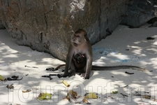 Monkey Beath