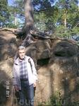по лесной дороге; сосна врастает корнями в камень...