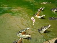 В зоо кормлю крокодилов)) зрелище)))))))