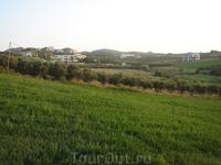 Вид на оливковые деревья с нашего отеля.