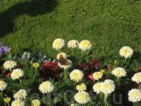 Весь парк это живой организм органично сочетающий цветы, кусты и другие растения...
