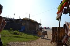 Фото 89 рассказа Индия. ГОА Арпора