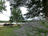 В парке растет много лаванды, и от ее запаха воздух в парке просто какой-то вкусный, им невозможно надышаться.