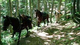 Навстречу нам попались взмыленные лошади