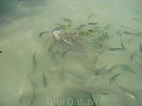 рыбки на Пхи-Пхи