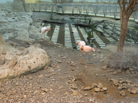А это крытый вольер с птицами... фламинго важно разгуливают вдоль прудика