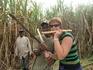 В зарослях сахарного тростника...окружили агрессивные гаитянцы