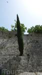 Кипарисы растут прямо из стен)