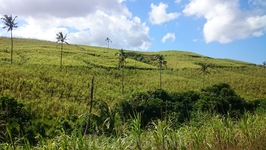 На следующий день мы вновь поехали по острову. Проезжали мимо чайных плантаций.
