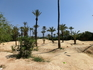 Такой вот уголок природы, имитирующий пустыню. Почему-то вспомнился Лермонтов и его Три пальмы - В песчаных степях аравийской земли Три гордые пальмы высоко ...