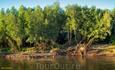 Мохнатые корневища белой ивы тонкими прядями свисают к воде, переплетаются в густую сеть, образуя подобие мангровых лесов