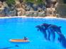 Дельфины везде трудятся на совесть