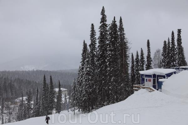 Ноя 2010. А это знаменитые Шерегешские ели. У нас в Новосибирске таких нет.