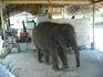 Трёхлетний слоник Джоник