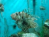 Вот такую красоту вам покажут в маленьком аквариуме в Эль-Гуне