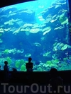 Фотография Океанариум Siam Ocean World