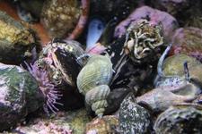 Обитатели Lofoten Aquarium в Кабелваге