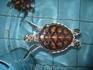 морская черепашка. им несколько месяцев
