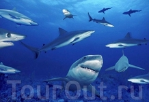 Океанариум «Акулий риф»