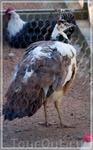 птицы,JARDINS DU CHATEAU DU CHAMP DE BATAILLE