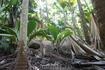 Джунгли на Праслине. На этом острове находится парк, в котором растут деревья с орехами коко-де-мер. И не только. Там много разных странных растений.
