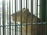 В зоопарке по дороге из Каира в Александрию