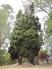 дерево с попугаями