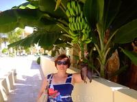 бананы на пальмах