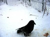 Один из обитателей зоопарка - мудрый ворон