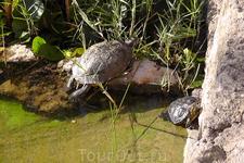 Черепахи, черепахи... Каждый день было интересно за ними наблюдать...