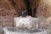 Напротив церкви - фонтан с носорогом. Надо сказать, что все контрады носят названия животных: птиц, рыб и зверей...