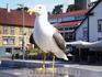 Чайка на набережной Ставангера