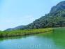 камыши на реке Дальян