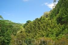 Мауи -дорога сквозь джунгли