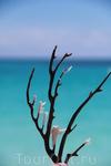пляж Сирена, вот такие радости выбрасывает на берег волнами