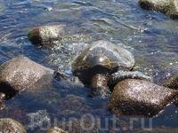 Большой Остров -Пляж Черного Песка